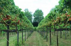 Frans van Beerendonk verzorgt excursies en rondleidingen op het aardbeienbedrijf en wandelingen in Het Groene Woud