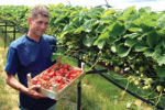 Aardbeienkwekerij van Beerendonk Verkoop