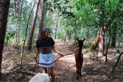 Alpacafarm Riethoven Alpaca wandeling