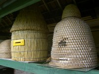 Bijenhal De Bijencirkel Excursie bijenhal