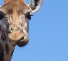 BrabantseGroepsuitjes.nl Kano Safari
