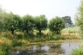 De Kilsdonkse Molen staat in een bijzondere omgeving.