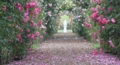 Sinds kort kun je zelf kiezen waar je wil trouwen. Wat is er romantischer dan trouwen tussen de rozen?