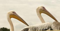 Sinds deze zomer scheren de vogels in Dierenrijk letterlijk over je hoofd in het nieuwe Vogelrijk!