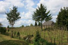 Domaine les Damianes Excursie Rooise wijngaard