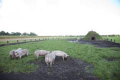 Den Elshorst heeft onlangs n samenwerking met collega-boerenbedrijven de boerderijweek opgezet. Met de vraag \'Waar komt ons voedsel vandaan?