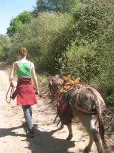't Skônste Plekske organiseert in de Rooise Heide, Natuurgebied de Geelders en rondom Schijndel wandeltochten met ezels
