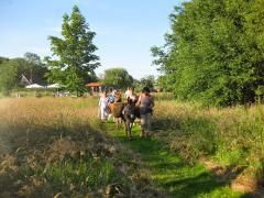In samenwerking met Theetuin Miss Hyacinth is het mogelijk om met de ezels een wandeling naar deze leuke locatie te maken.