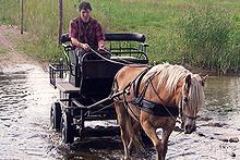 Diverse groepsactiviteiten mogelijk oa wandeltochten met boswachter,rit met paard en wagen,mountainbike tochten en schilderworkshops.