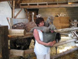 Bij Struisvogelboerderij Heierhof komt u van alles te weten over deze merkwaardige en aardige beesten.