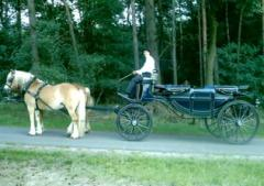 Verhuur van huifkarren voortgetrokken door mooie paarden door het schitterende natuurgebied de Strabrechtse Heide.