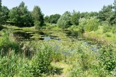 IVN Etten-Leur e.o. Natuurgebied Koninginnebos