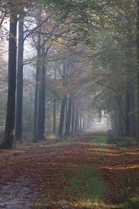 Het bos staat bekend als het grootste Zomereikenbos van ons land.