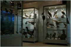 De collectie in het museum kan de bezoeker helpen om de in de directe omgeving voorkomende vogels te herkennen.