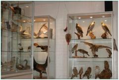 IVN Etten-Leur e.o. Natuurmuseum