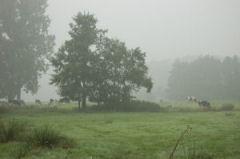 IVN Oirschot Bomenwandeling door Oirschot-dorp