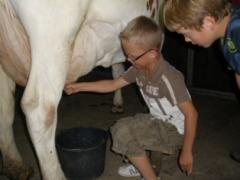 Kampeerboerderij De Tienmorgen Ouderwets Koe-melken