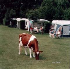 Achter de nog in bedrijf zijnde boerderij zijn wij in 1995 een mini-camping gestart. Midden in de natuur, landelijk gelegen.