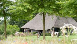 De Hoevens biedt 2 sfeervolle vakantiehuizen voor comfortabele familievakanties.