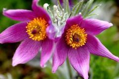 Vanaf 1972 is er rondom het museum een groot aantal tuinen aangelegd met de bedoeling bezoekers te laten genieten van vele soorten bloemen en planten.