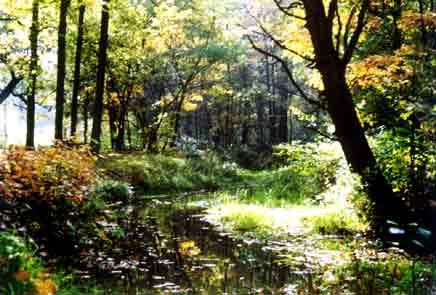 Natuurgebied Baest Wandeling in de Baest