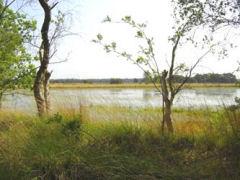 De Kampina is een gevarieerd natuurgebied met een uitgestrekt heide, naaldbosgebieden en vele vennen.