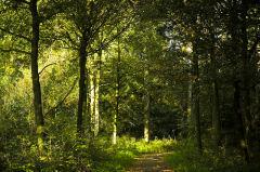 Natuurgebied De Mortelen De Mortelen