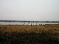 Natuurgebied Kuikeindse heide Kuikeindse Heide