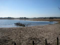 Aangrenzend aan de Landschotse Heide ligt de Kuikeindse Heide, wat een naaldhoutgebied is