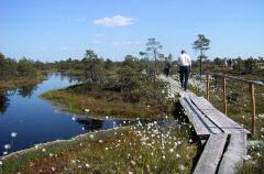 De Landschotse Heide is een natuurgebied van 239 ha ten oosten van Westelbeers