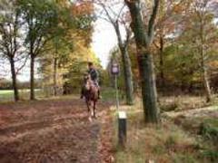 De Oirschotse Heide is een groot heide- en stuifzandgebied dat gedeeltelijk is begroeid met grove dennenbomen.