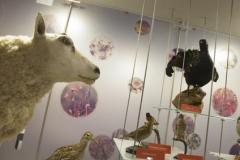 Kom mee naar Buiten maar kom eerst binnen in Natuurmuseum Brabant!