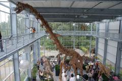 In de zomer van 2007 is de dinosaurus-parade geopend met veel verschillende dinosaurussen.