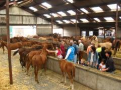 Voor individuele personen is de paardenmelkerij  van april t/m oktober te bezoeken op woensdagmiddag van 13.00 tot 16.00 en op zaterdag  van 10.00 tot
