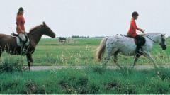 Routes in Brabant Paardrijden