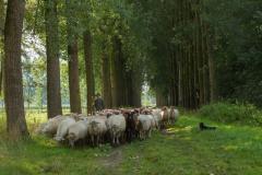 Wandeling Cor's pad via een route gaat u zelf het herderspad lopen.