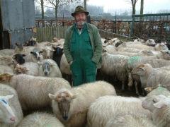 Wandeling met herder en de schapen deze tocht gaat u samen met onze  herders maken, de herder vertelt wat over zijn schapen en zijn honden.