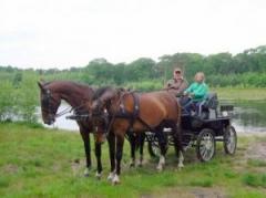 Tijdens de ongeveer 3 uur durende workshops leert u het begrijpen van een paard, oefent u aan het mentoestel en mag u zelf een span paarden mennen.