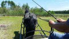 Managementtraining met behulp van paarden.