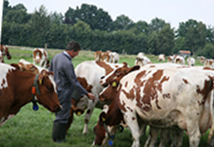 Een leuke en leerzame excursie naar een moderne melkveehouderij.