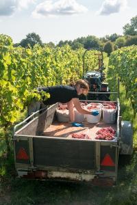 Wijngaard De Daalgaard Rondleiding wijngaard met wijnproeverij