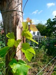 Wijnhoeve Koningbosch Rondleidingen en proeverijen