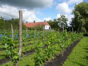 Op afspraak kunnen we rondleidingen in de wijngaard verzorgen.