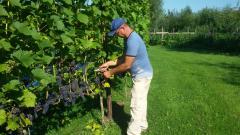 Winery & Herbs Zelf mee helpen in de wijngaard en wijnmakerij?