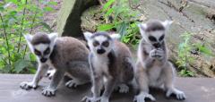 Wanneer u met een groep vanaf 20 personen Zoo Veldhoven wil komen bezoeken, neemt u dan vooraf even contact met ons op.